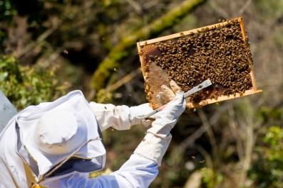 corso apicoltura