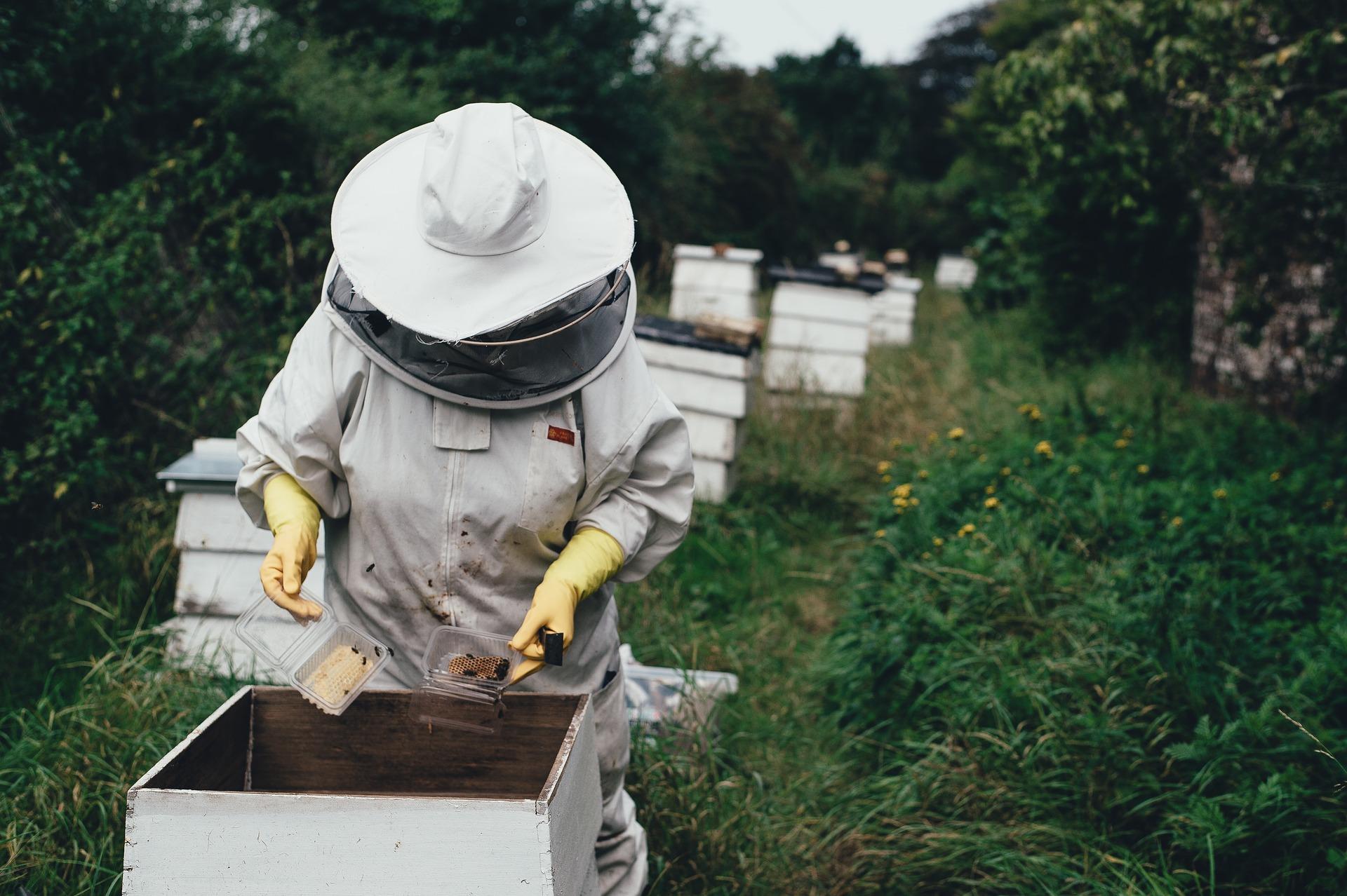 apiary-1866740_1920