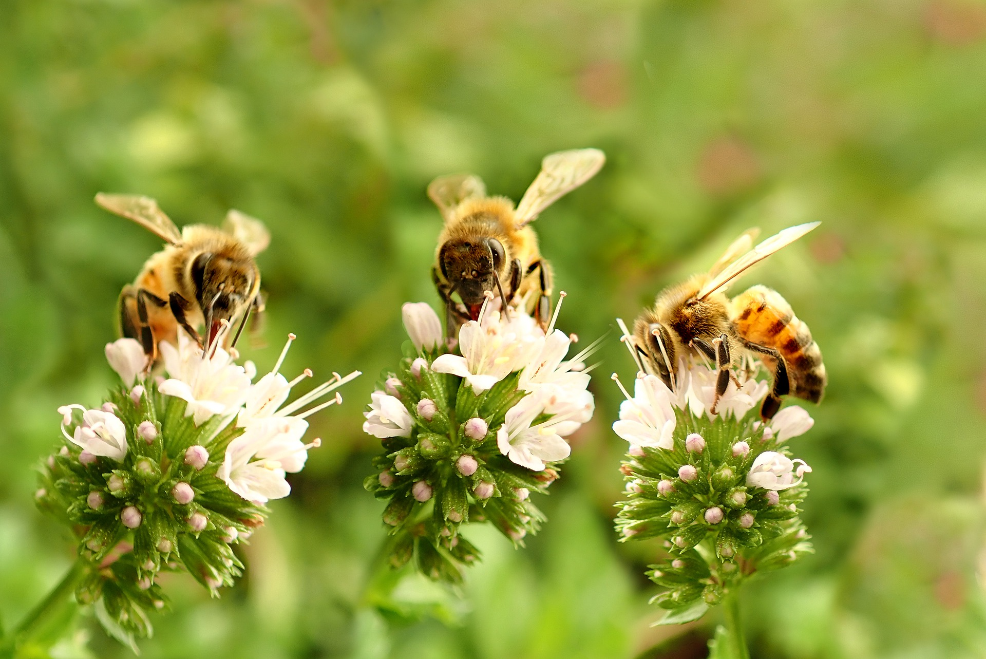 bees-5023483_1920